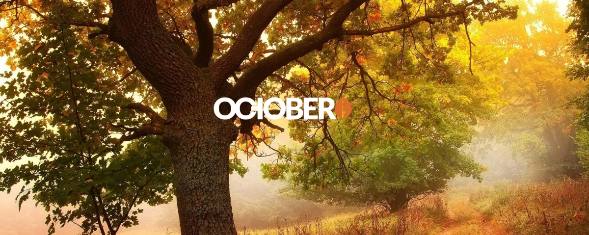 creating a basic theme with october cms industrial
